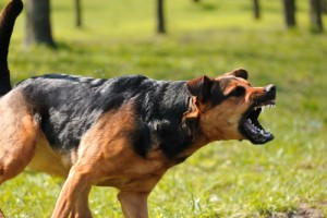 Denver & Boulder Dog Injury Lawyer